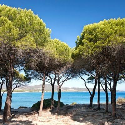 summer camp italia vela sub compiti inglese viva international 2